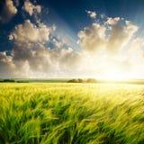 Coucher du soleil au-dessus de zone verte Photographie stock libre de droits