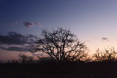 Coucher du soleil au-dessus du delta d'okavango au Botswana photos libres de droits
