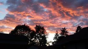 Coucher du soleil au-dessus des arbres Images libres de droits