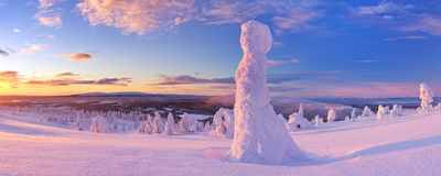 Coucher du soleil au-dessus des arbres congelés sur une montagne en Laponie finlandaise Photographie stock
