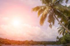 Coucher du soleil au-dessus des arbres de noix de coco Images stock