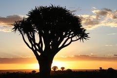 Coucher du soleil au-dessus des arbres de tremblement Photo libre de droits