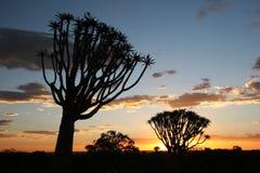 Coucher du soleil au-dessus des arbres de tremblement Image libre de droits