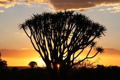 Coucher du soleil au-dessus des arbres de tremblement Images stock
