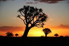 Coucher du soleil au-dessus des arbres de tremblement Image stock