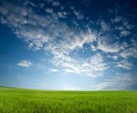 Coucher du soleil au-dessus des collectes vertes photo stock