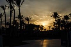 Coucher du soleil au-dessus des palmiers en Egypte Photos libres de droits