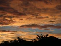 Coucher du soleil au-dessus des paumes Images stock
