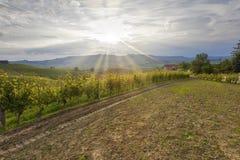 Coucher du soleil au-dessus des vignobles Image de couleur Images stock
