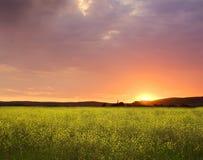 Coucher du soleil au-dessus des zones de canola Image stock