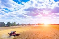 Coucher du soleil au-dessus du cartel travaillant au champ de blé Photo stock