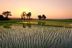 Coucher du soleil au gisement de riz Images stock