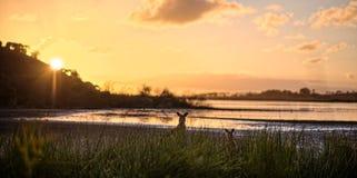 Coucher du soleil au parc national de colline de tour Images stock