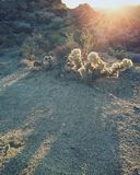 Coucher du soleil au ressort de peuplier Images stock
