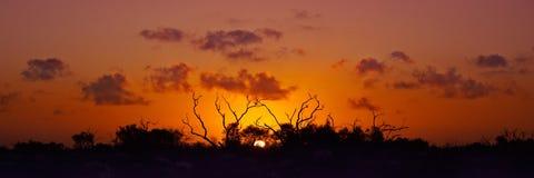 Coucher du soleil australien de Bush Photographie stock