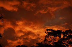 Coucher du soleil australien de Bush Photo stock
