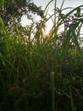 Coucher du soleil autour du buisson images libres de droits
