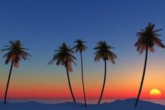 Coucher du soleil avec des palmiers Image stock
