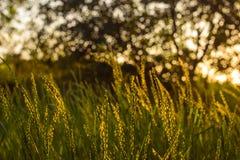 Coucher du soleil avec du charme sur un champ Images stock