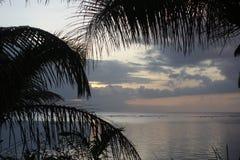 Coucher du soleil avec l'arbre de ferme Image stock