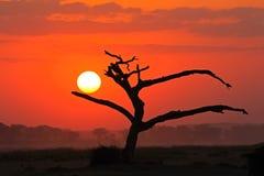 Coucher du soleil avec l'arbre silhouetté Images libres de droits