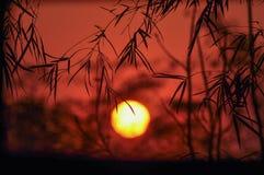 Coucher du soleil avec la feuille en bambou Photo stock