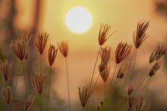 Coucher du soleil avec la fleur dans la prairie Photo stock