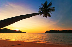 Coucher du soleil avec la paume Photo libre de droits