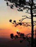 Coucher du soleil avec la silhouette de pins noirs Image stock