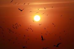 Coucher du soleil avec la vue des oiseaux Photo libre de droits
