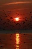 Coucher du soleil avec la vue des oiseaux Image libre de droits