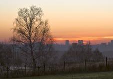 Coucher du soleil avec le bouleau et le ciel orange photo libre de droits