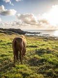Coucher du soleil avec le cheval Image libre de droits