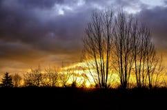 Coucher du soleil avec le ciel dramatique et un groupe d'arbres stériles Photographie stock