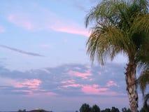 Coucher du soleil avec le palmier avec les nuages bleus, pourpres et roses images libres de droits