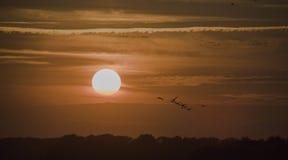Coucher du soleil avec le transfert d'oiseau photographie stock libre de droits