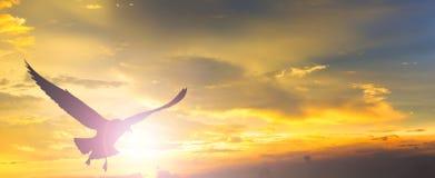 Coucher du soleil avec le vol d'oiseau photos libres de droits