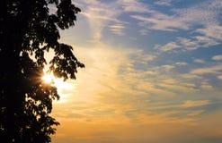Coucher du soleil avec les nuages effilés et la silhouette de l'arbre du côté gauche photos libres de droits