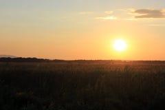 Coucher du soleil avec million de moustiques Photo stock