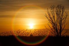 coucher du soleil avec un oiseau de combat photos libres de droits