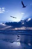 Coucher du soleil bleu Photo stock