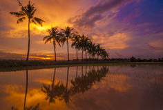 Coucher du soleil brûlant avec la réflexion de l'arbre tropical Photographie stock