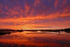 Coucher du soleil brillant au-dessus de marais de zone humide Photo libre de droits