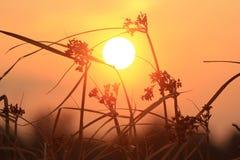Coucher du soleil chaud de montagnes avec le ciel orange Photos libres de droits