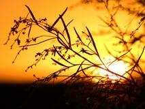 coucher du soleil chaud entre les branches, le coucher du soleil dans le domaine Photos libres de droits