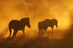 Coucher du soleil chez Okaukeujo, Namibie Photos libres de droits