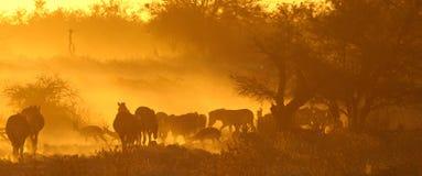 Coucher du soleil chez Okaukeujo, Namibie Photographie stock libre de droits
