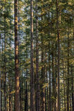 Coucher du soleil chez Wallace Falls State Park Images libres de droits