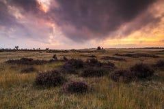 Coucher du soleil coloré au paysage de bruyère Image libre de droits