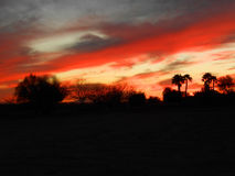Paumes de coucher du soleil Image libre de droits